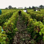 [Financer sa formation] Faire les vendanges